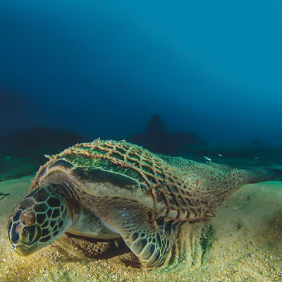 Gear made from Fishing Nets - ECONYL - turtle trapped in ghost net